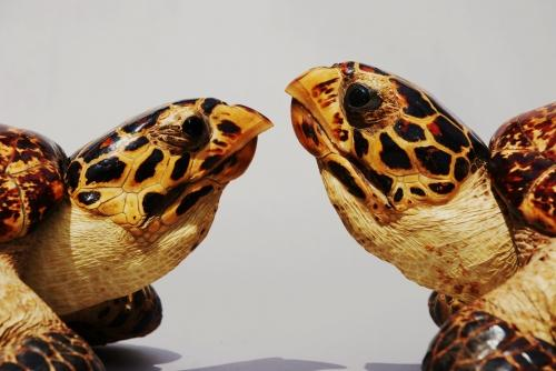 Pair of early 20thc hawksbill stuffed turtles