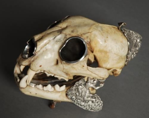 Late 19thc Colonial panther skull