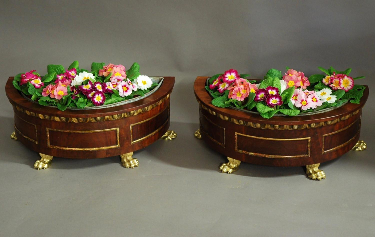 Decorative pair of 19thc mahogany jardinieres