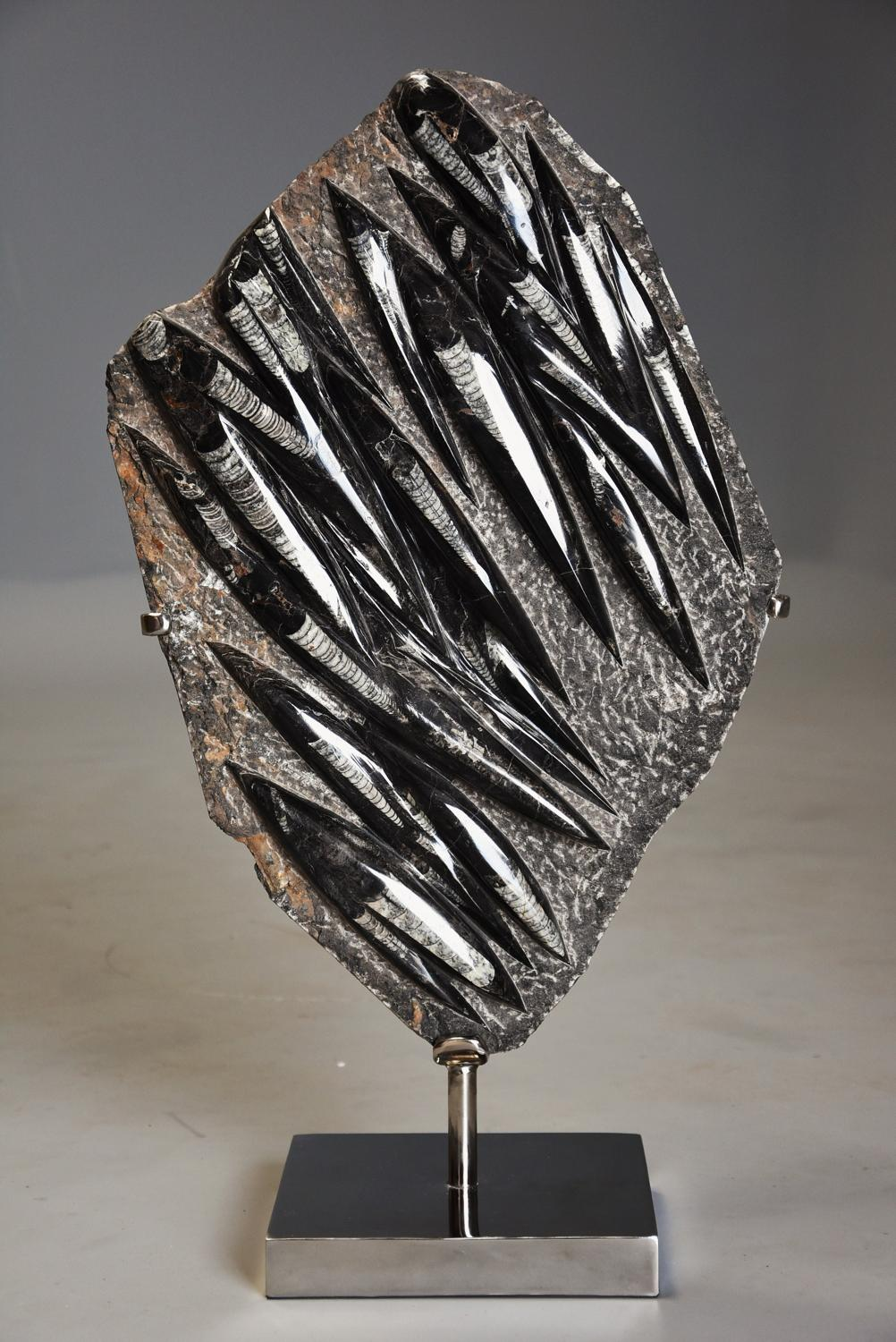 Polished Orthoceras fossil mounted on chrome base